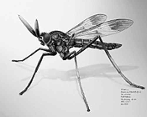 No detail is left out at the Guild of Natural Science  Illustrators 2003 Juried Show, opening Thursday at  the  Denver Museum of Nature & Science.