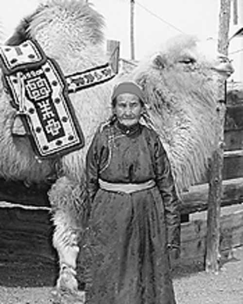 Over the hump: A Mongolian woman and her camel in  The Story of the Weeping Camel.