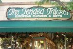 Tended Thicket