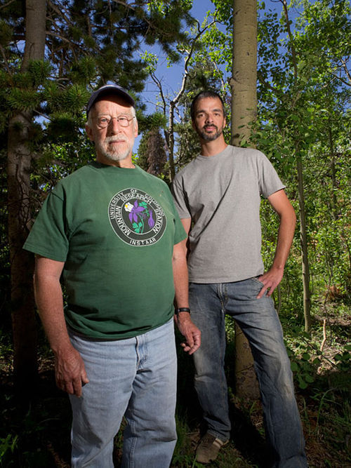 CU researchers Jeff Mitton (left) and Scott Ferrenberg observed the beetles achieving two generations a summer. Slide show: Meet the beetles: How Colorado's forests are bugging out