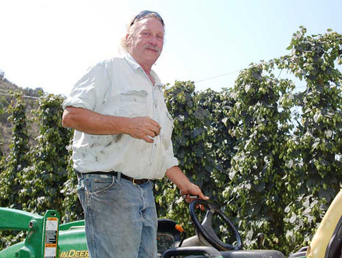 Glen Fuller drives the growth at Rising Sun Farms in Paonia, which grows hops for Warrior IPA and Colorado Native.