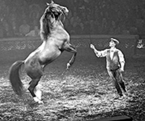 Horses are the focus of Cheval Théâtre's magic.