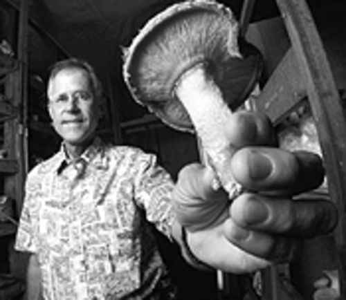 Dark victory: James Hammond offers 'shroom service at his Colorado mushroom farm.