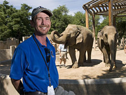 Dale Leeds is the large-mammal curator at the Denver Zoo; Packy, a 47-year-old bull, towers over a female elephant at the Oregon Zoo.