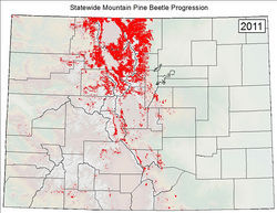 A 2011 map from the Colorado State Forest Service shows the beetle epidemic's spread since 1996. Slide show: Meet the beetles: How Colorado's forests are bugging out