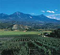 Colorado's Grand Valley is the new Napa.