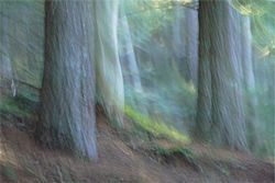 """In the Woods,"" by Gunnar Plake, C-print on aluminum."
