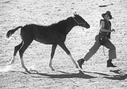Chase Moore (right) and friend make tracks in Running Free.