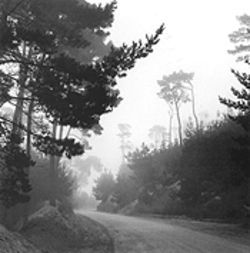 """Trees, Fog and Road: Del Monte Forest, California,""  by Ron Wohlauer, silver gelatin print."