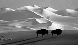Celebrate Great Sand Dunes National Park with the  authors and photographers of Valley of the  Dunes, Wednesday at the Tattered Cover LoDo.