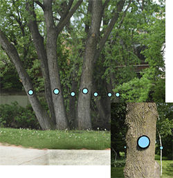 """Connect the Dots,"" by Mary Miss, site-specific installation."
